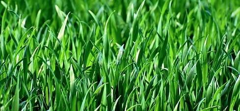 hoe vaak grasmaaien voor het mooiste resultaat