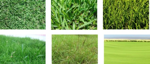 types gras van invloed op grasmaaien