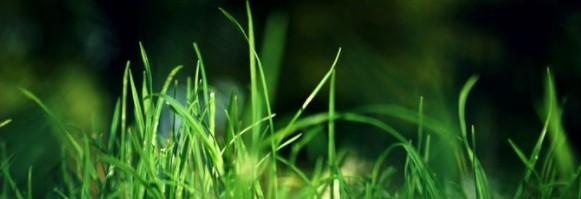 zorgen voor voldoende licht op je gras met gras maaien